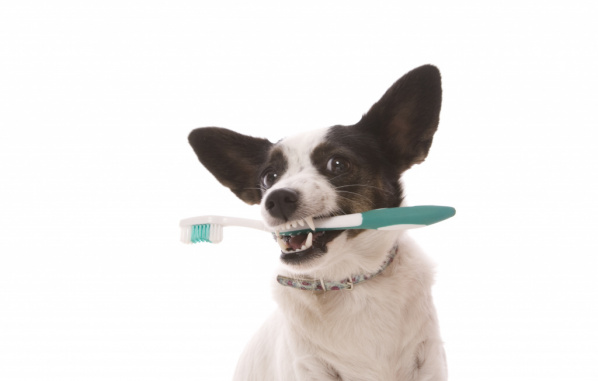 Brushing your pets teeth